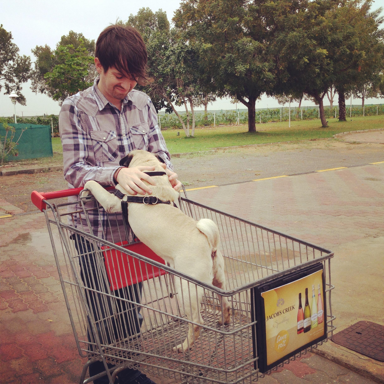 adopt a pug at k9