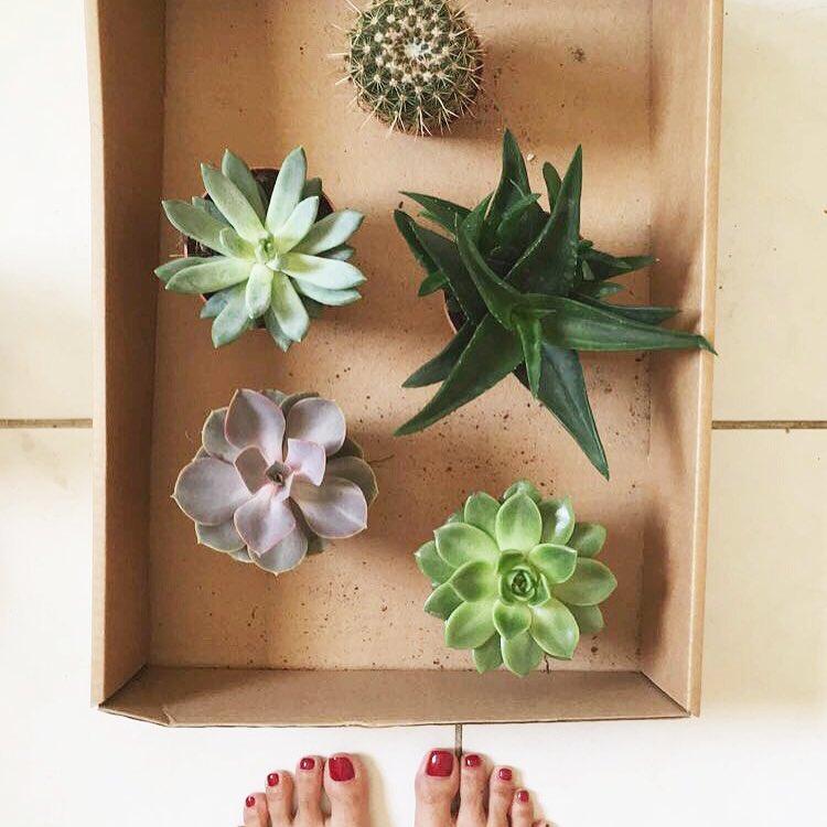 cacti succulents desertplants greenlife dubaigardencentre iwanttobeagardener vscocam posttheaesthetics