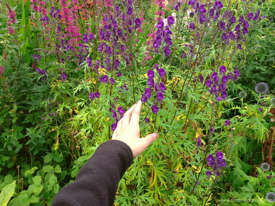 Flowers Scotland