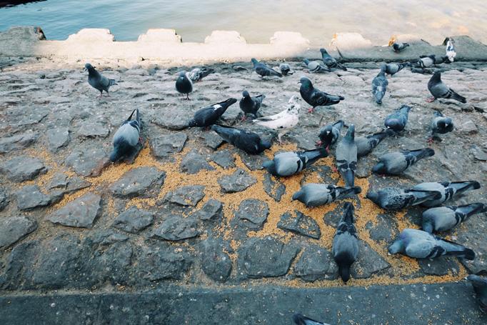 Birds in Dubai